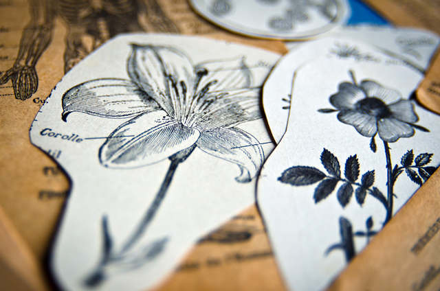 Atelier assuna magnet fleurs