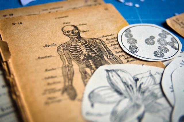 Atelier assuna magnets anatomie
