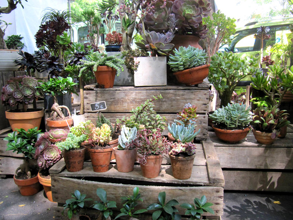 Le jardin des truculentes