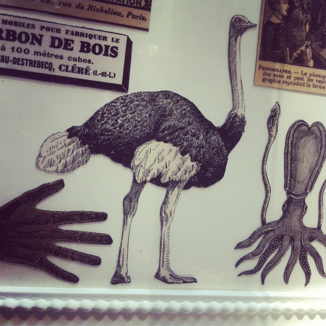 Magnets vintage animaux sur Instagram